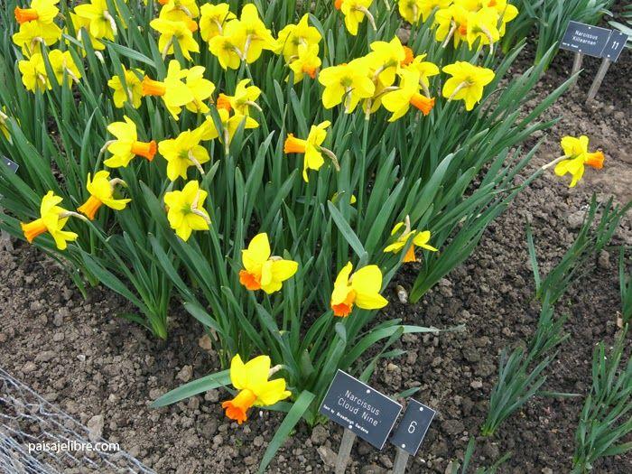 Los once mejores bulbos para plantar en oto o paisaje - Bulbos de otono ...