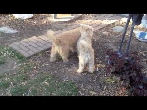 Puppy Soccer Time Caretzu S 6 Months Old Now Puppies Soccer Time 6 Month Olds