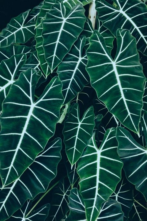 See More Of Lisadominguez S Vsco Plantas Plantas De Sombra