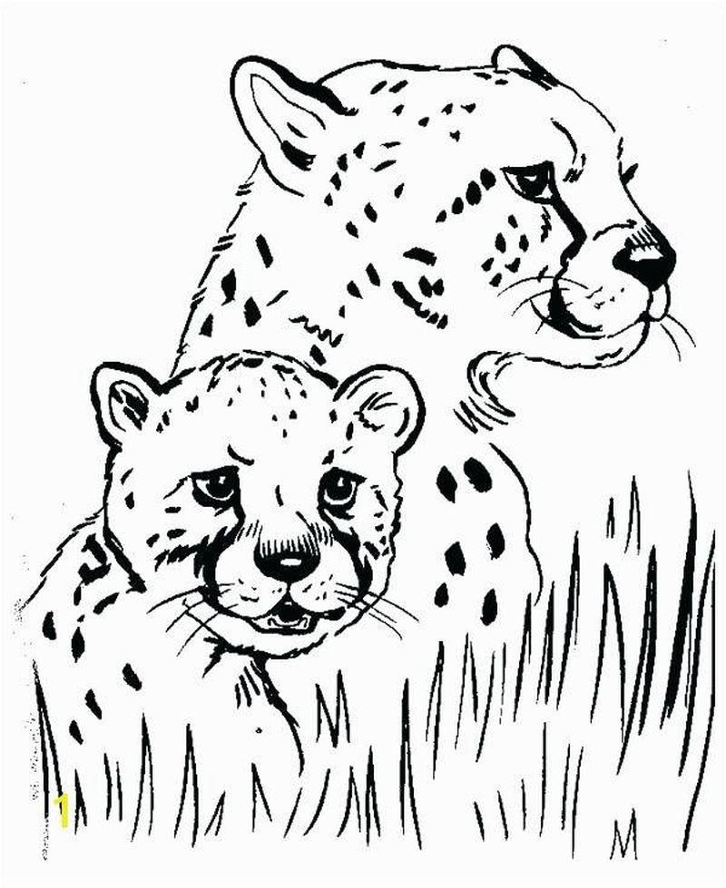 Coloring Page Printable Cheetah