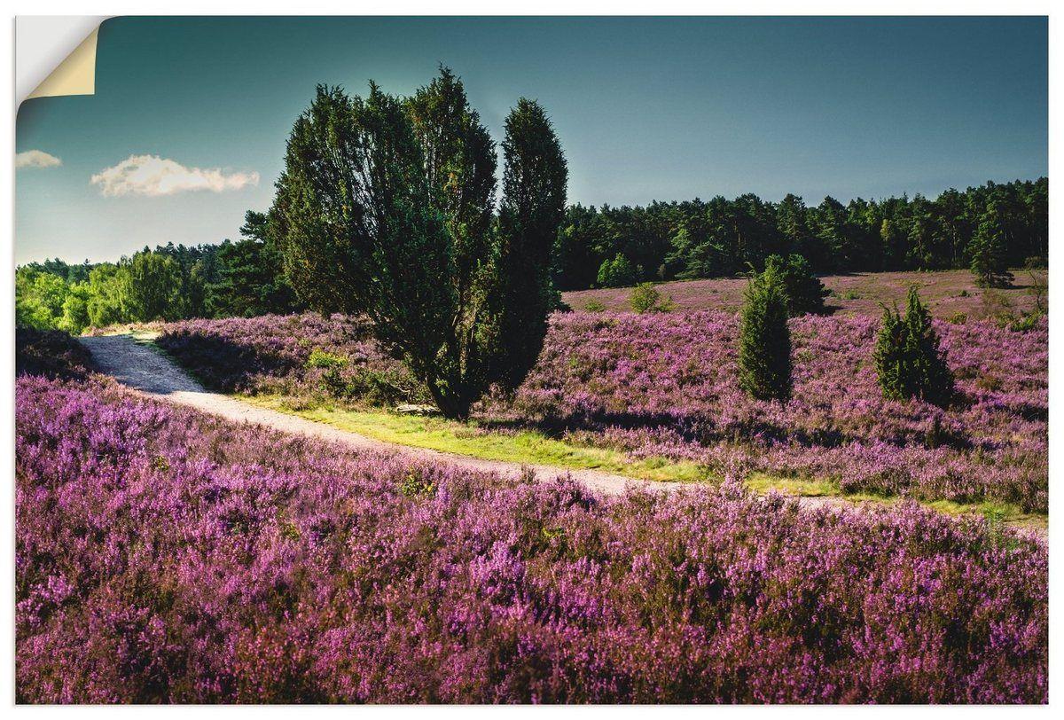 Photo of Premium wall film »K. Krause: Romantic Path, Lüneburg Heath «