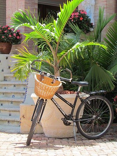 We Leave May 3 And This Will Be Our Main Mode Of Transportation Key West Key West Activities Cool Places To Visit