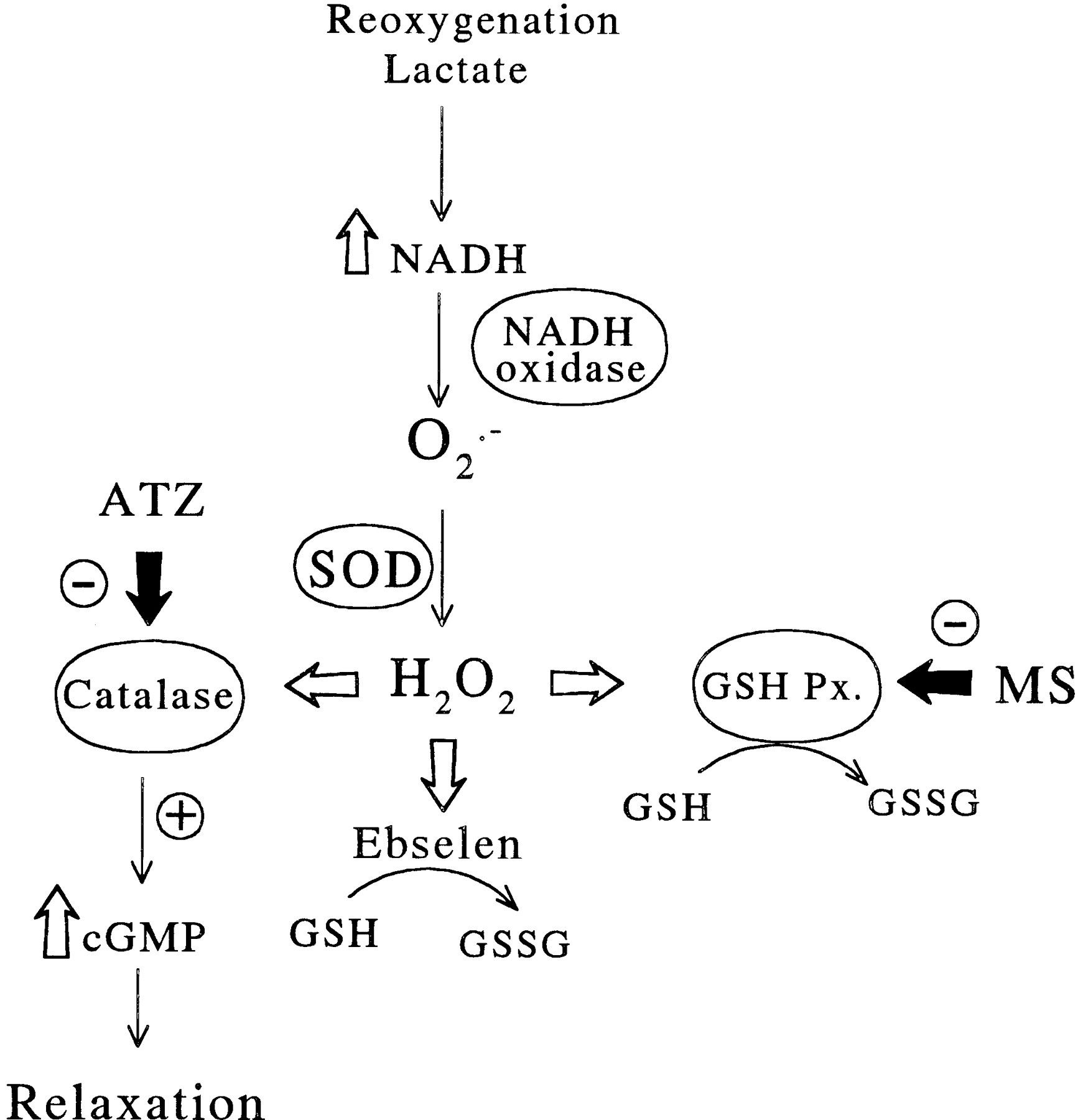 Tj Fructose 6phosphate Also Known As The Neuberg Ester Is