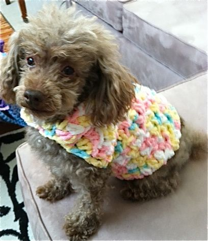 Sugarplumdolls.com  Check out my dog elmo super cute sweaters! Some I made for him. I have a great dog biscuit recipe that I make for him from time to time. https://youtu.be/sAI6_WQRV7E     https://youtu.be/HFLC1ZWL4YY