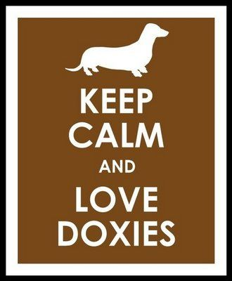 … love doxies