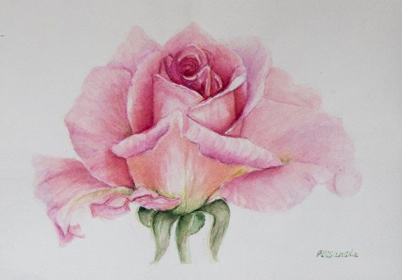 Pink Rose Aquarelle Roses Painting Rose Still Life By Pdisanska