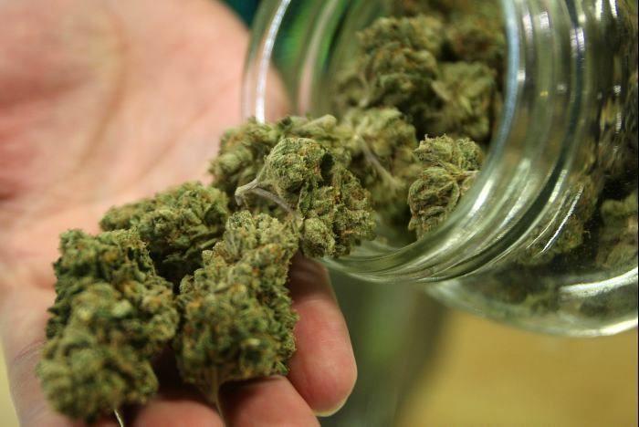 Farmacias resultaron insuficientes para cannabis en Uruguay