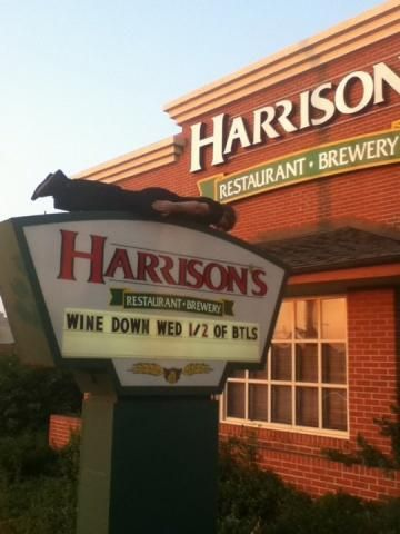 Harrisons Restaurant And Brewery In Orland Park Illinois Best Breweries