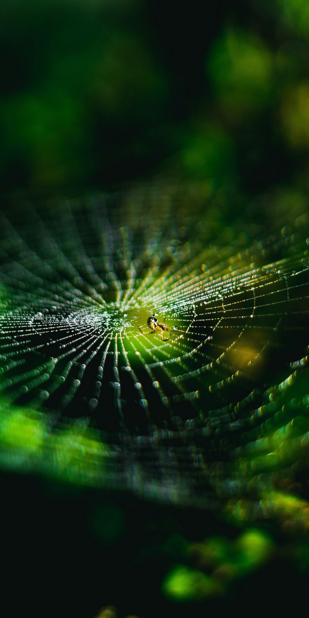 1080x2160 Spider Web Nature Insect Macro Wallpaper Spider Web Wallpaper Iphone Wallpaper