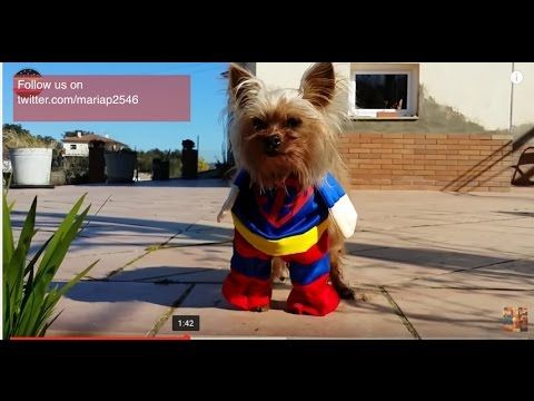 Funny Dogs Cute Puppies In Star Wars Superman Mickey Mouse