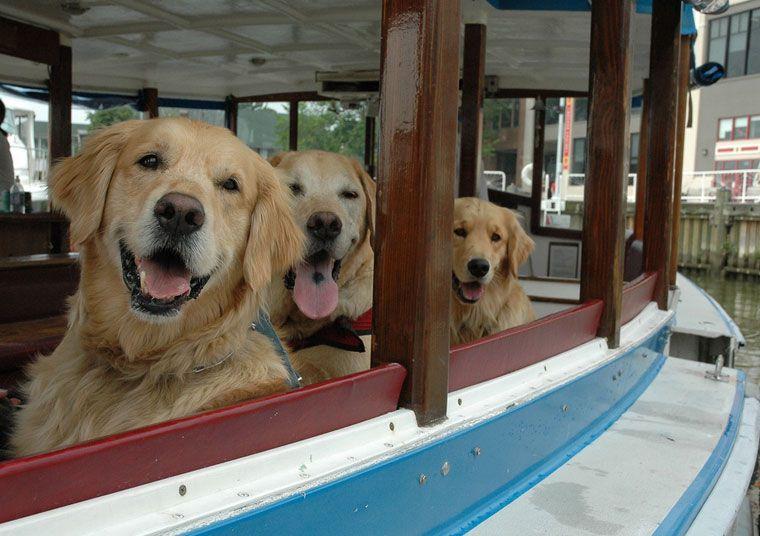 Canine Cruises On The Potomac Alexandria Va 22314 Visit Alexandria Virginia Dog Friends Dog Friendly Cities Dog Friendly Vacation
