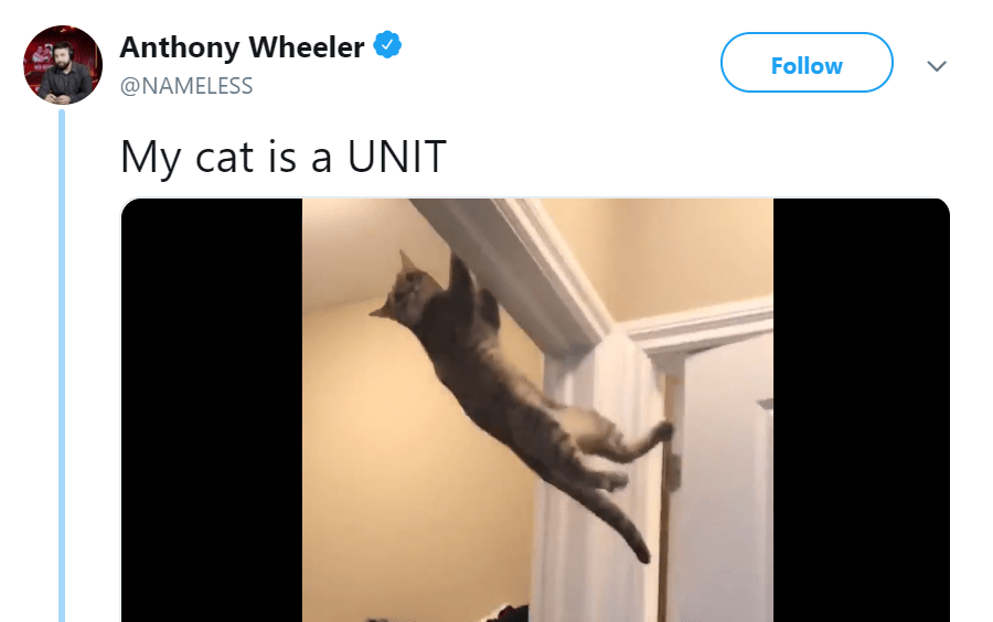 Twitter User Shares a Video Of His Unit Cat Doing PullUps