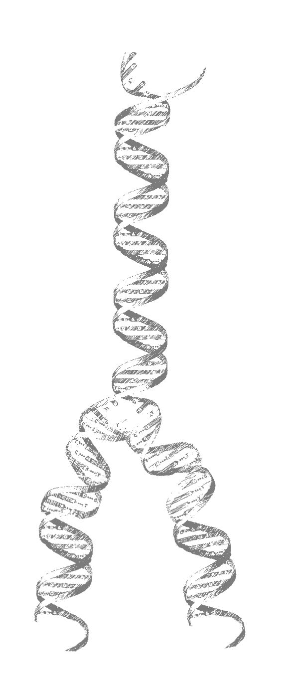 dna strand tattoo idea - photoshop manipulation of a scientific diagram to  make it sketchy and significantly longer than the original