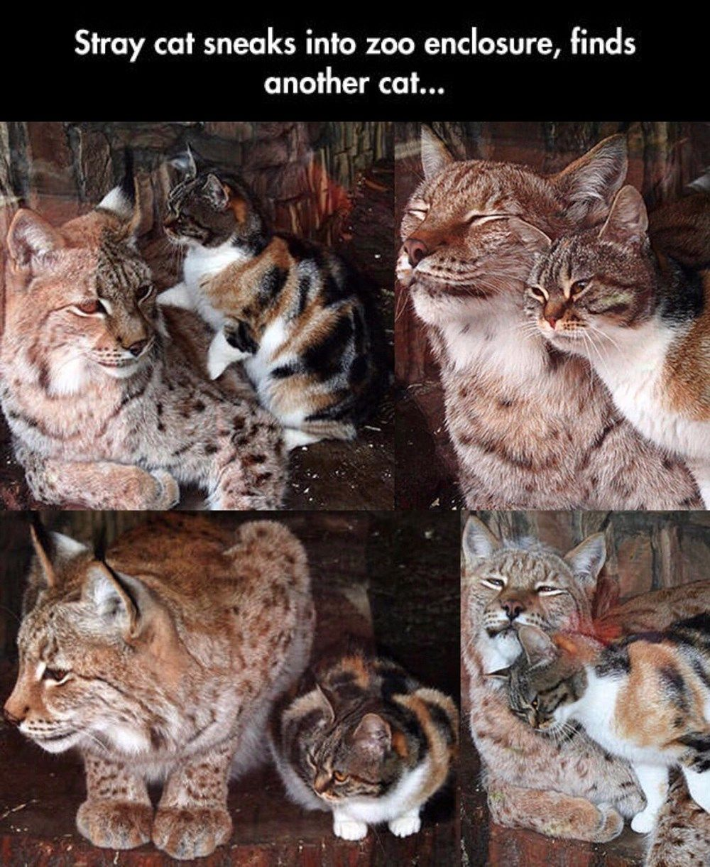 Big Cat And Smol Cat Cute Baby Animals Cute Animals Cute Funny Animals