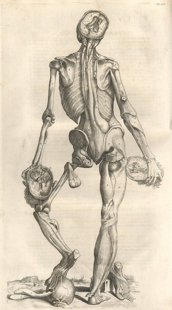 The Grisly History of Sourcing Bodies for Anatomical Learning An ...