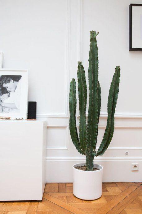 r sultat de recherche d 39 images pour grand cactus. Black Bedroom Furniture Sets. Home Design Ideas