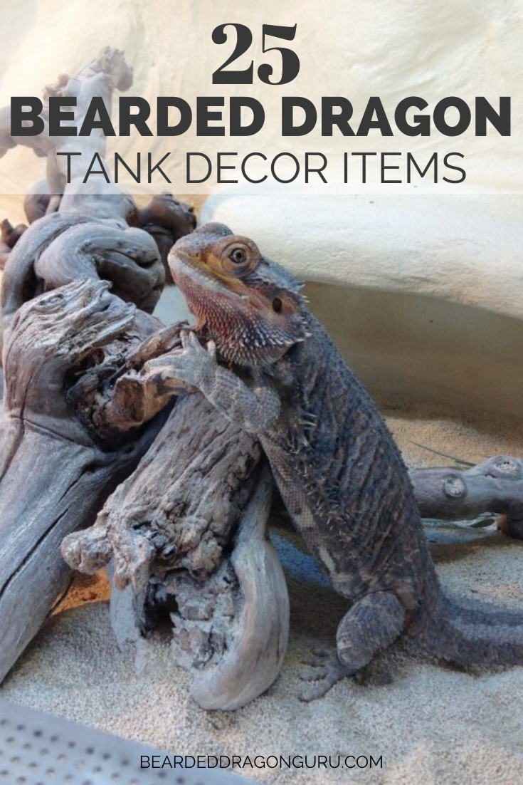 Selecting the correct tank decor for a bearded dragon is perhaps more important than many may at first think. Bearded dragons originate from Australia and because they are native to desert habitats, they require a fairly specific set of environmental conditions to survive and be happy. As their owner, you need to take time creating this habitat, which includes everything from heating lamps and the right flooring, to the best decorative items. #beardeddragonhabitat #tankdecor #terrariumdecor #pet