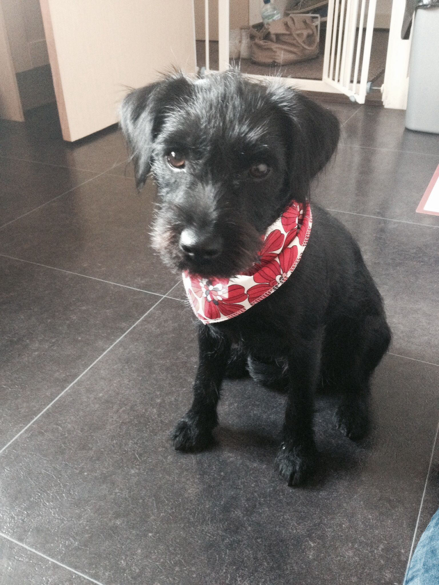 My Gorgeous Patterdale Crossed With A Border Terrier Her Name Is