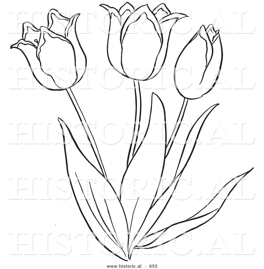 Coloring pages of flower buds - Cartoon Clipart Of An Outlined Tulip Flower Plant Black And White Vector Coloring Page By Picsburg