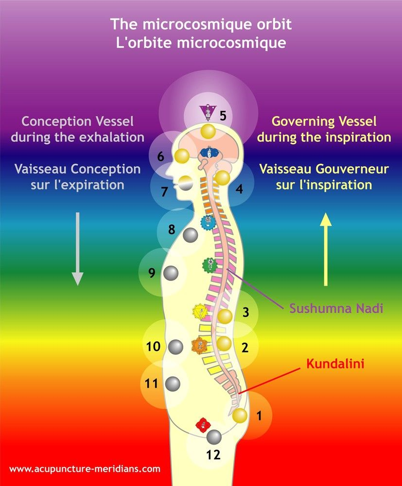 Favori chakras and acupuncture points /Microcosmique orbit sushumna  DL67