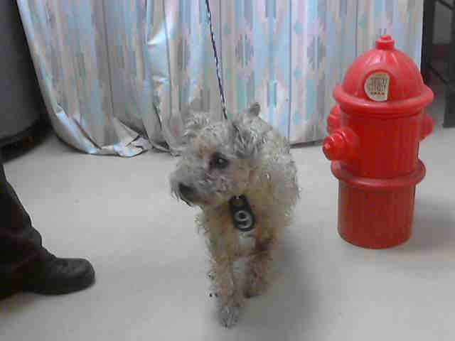 Bugsy Houston Texas Petharbor Com Animal Shelter Adopt A Pet