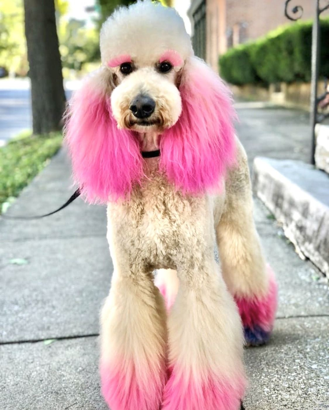 ♥︎ barbieville™ ♥︎ Creative grooming, Dog grooming, Pink dog