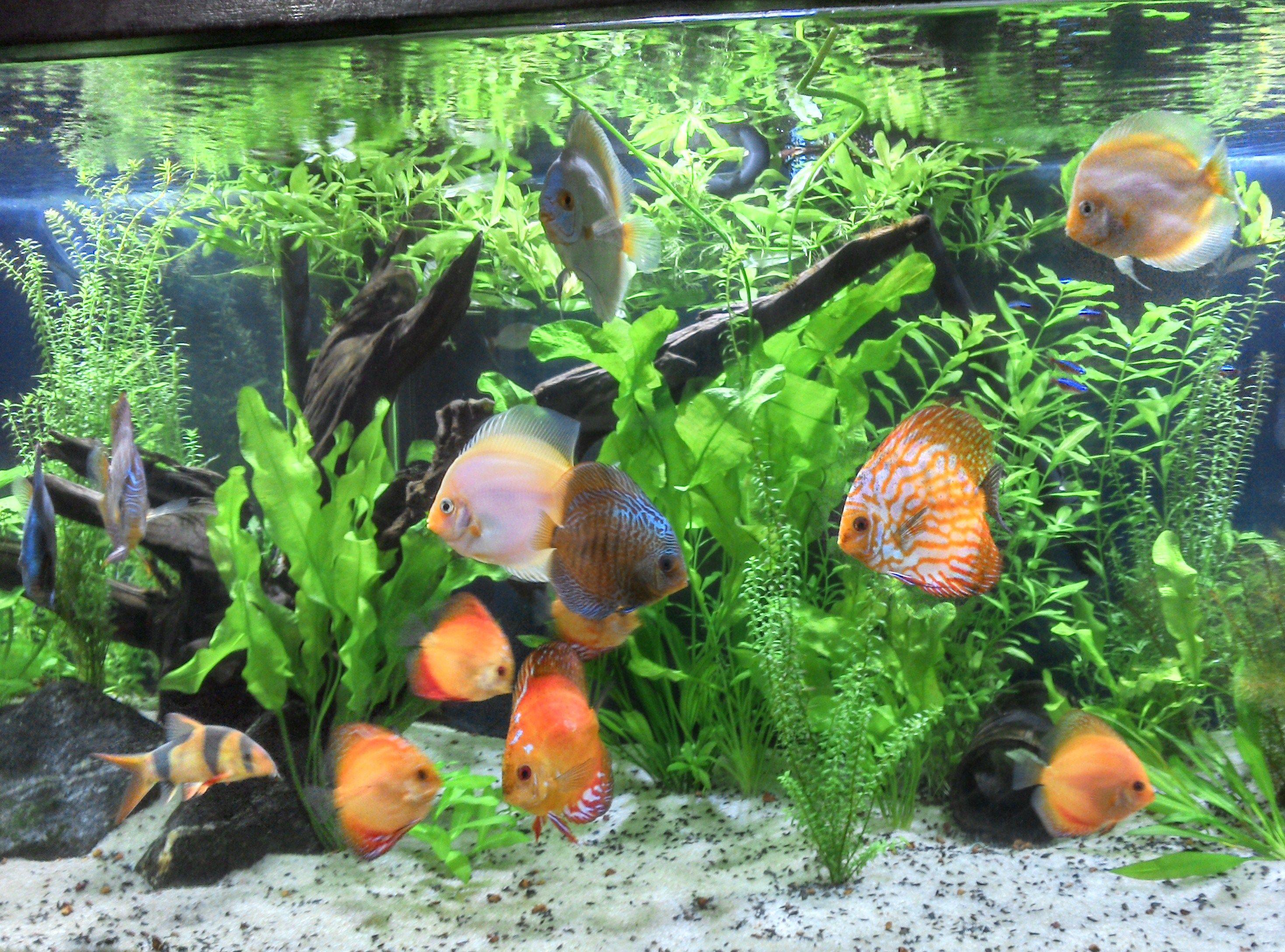 caab6398773e37509cb2eea11dc6135d Frais De Aquarium Tropical Schème