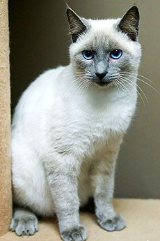 Cats That Are Purrrrfect For Your Home Baytown Texas Animal
