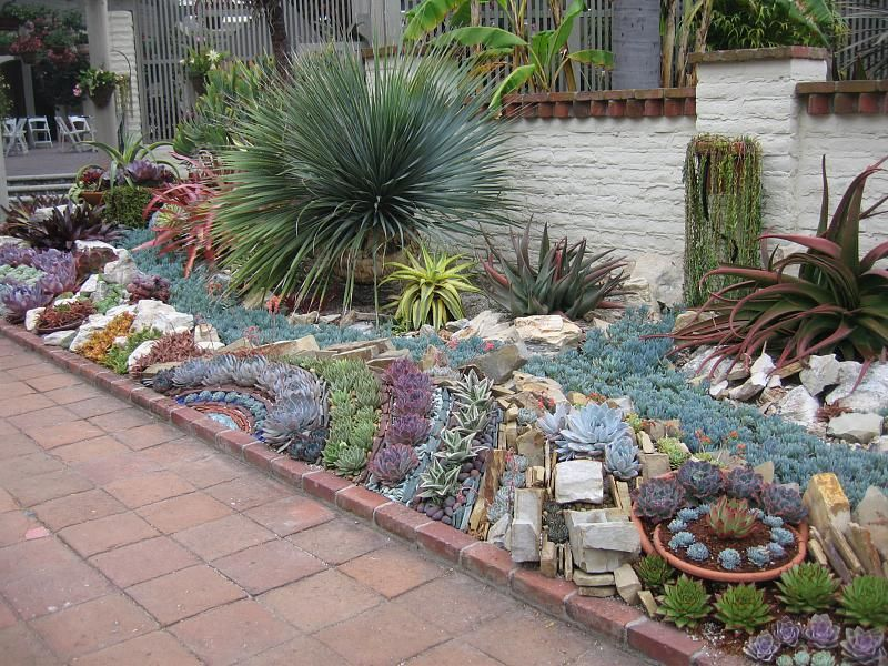 Artistic Succulent Garden Layout   Wide Angle