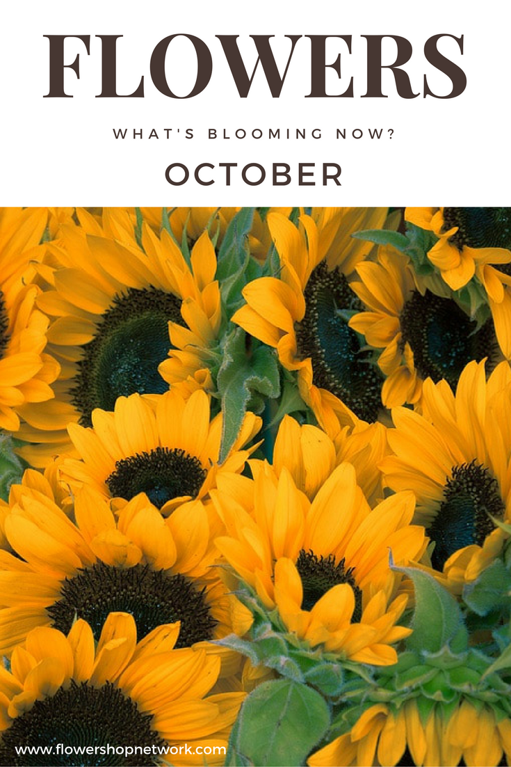See What Flowers Are In Season In The Month Of October October Flowers Fall Sunflower Pictures October Flowers In Season October Flowers