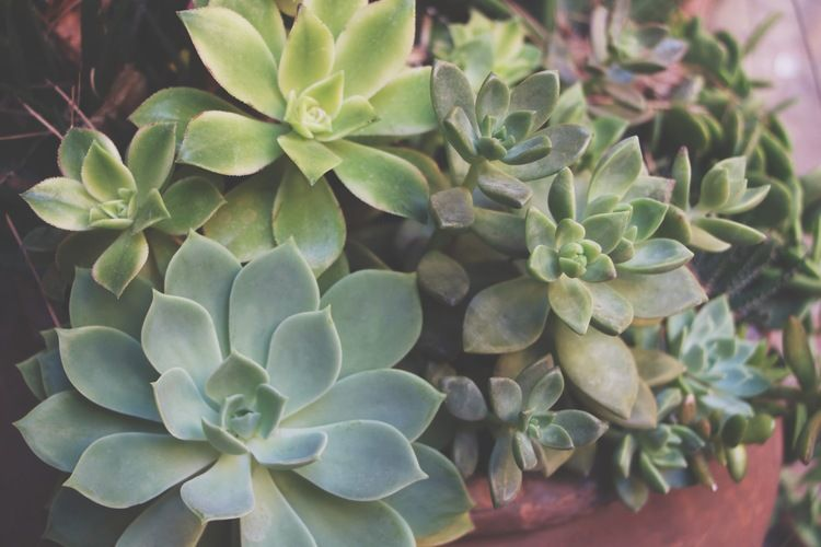 Succulents of Disneyland - I'M STEALING LEAVES TO PROPAGATE