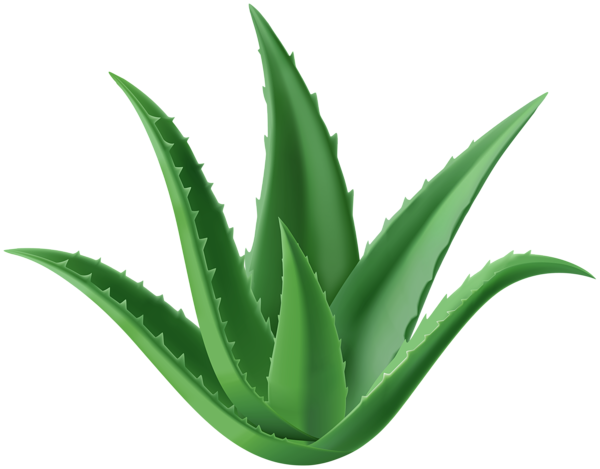 Aloe Vera Plant Png Clipart Aloe Vera Plant Aloe Vera Aloe
