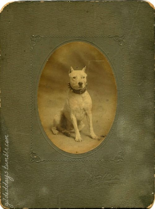 "Man's Best Friend - The back reads ""Firehouse dog, Slatington 1909."" Found in Gloucester, MA"