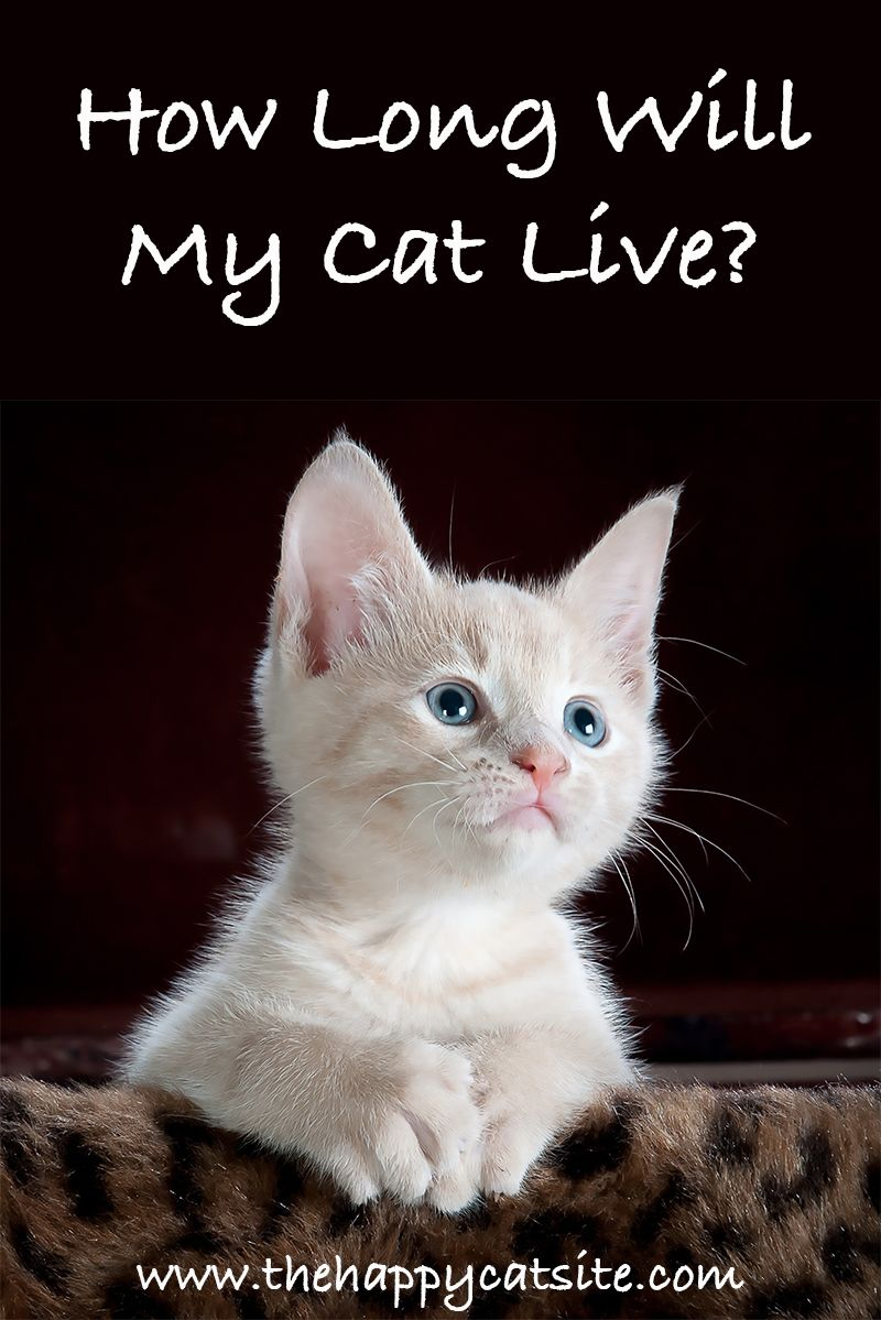 How Long Do Cats Live? A Guide To Cat Lifespan And Living