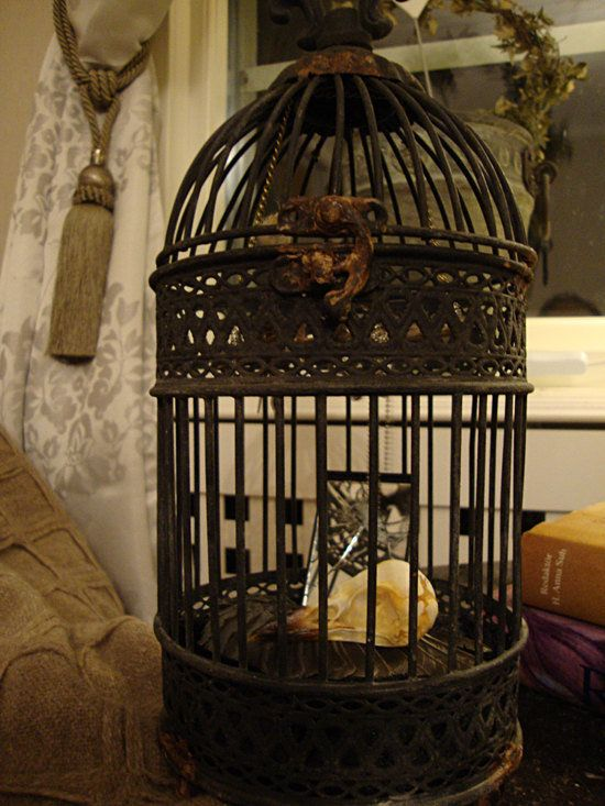 victorian gothic crow in cage beautiful goth pinterest. Black Bedroom Furniture Sets. Home Design Ideas