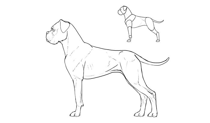 How To Draw Dogs Monika Zagrobelna Sketchbook Blog In 2019