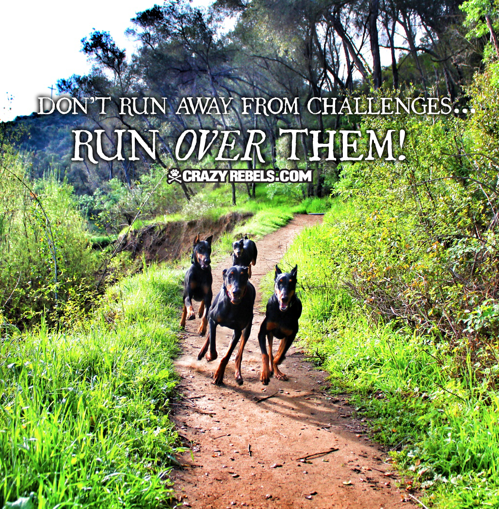 Don't run away from challenges, run OVER them! #quotes #inspiration #wordsofwisdom #dogs #love