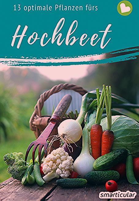 Photo of Die besten Hochbeetpflanzen: Gemüse, Kräuter, Früchte für eine gute Ernte
