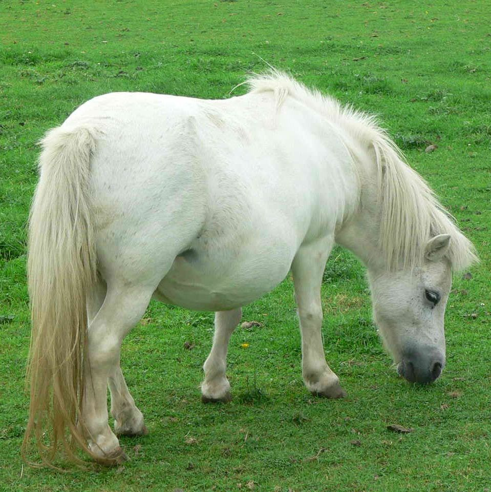 Find great deals on eBay for white ponys. Shop with confidence.