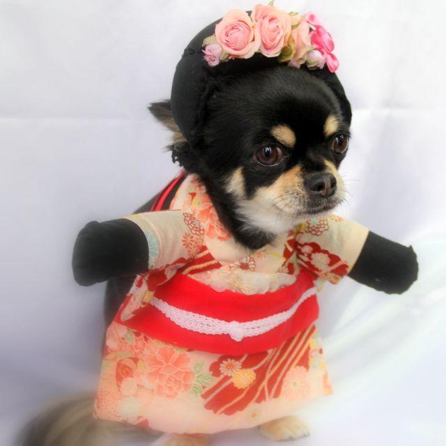 http://dogdressnideru.blogspot.jp/  amazon facebook google+ rakuten