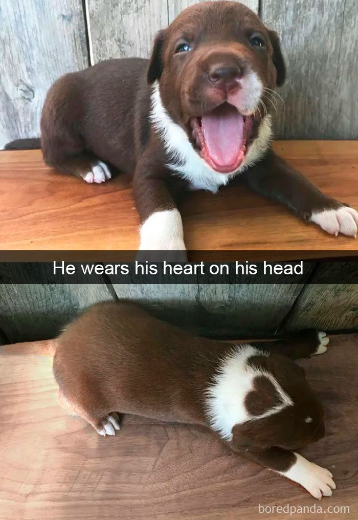 30 lustige und süße HundeSnapchats die hoffentlich Ihren Tag   Humor Bilder