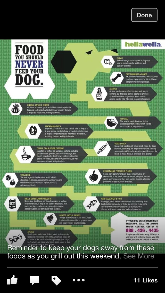 Bad foods for dogs