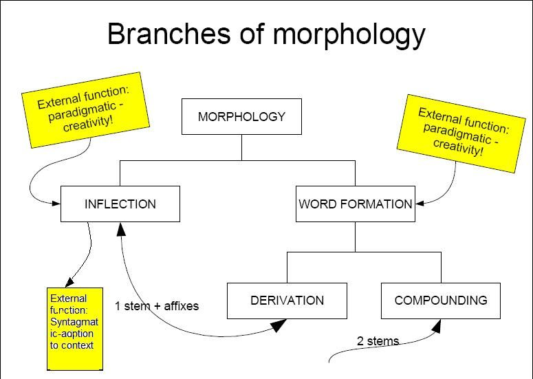 english morphology Morphology in the english language linguistics is the study of written and spoken languages within linguistics there are different categories to study, one of which is morphology.