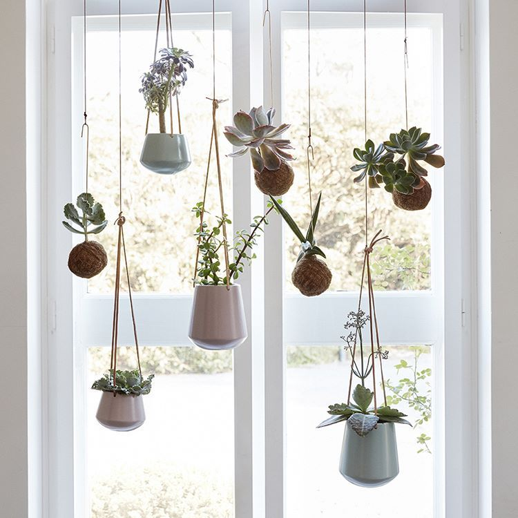 We love the hanging plant trend its a cool and - How to hang plants in front of windows ...