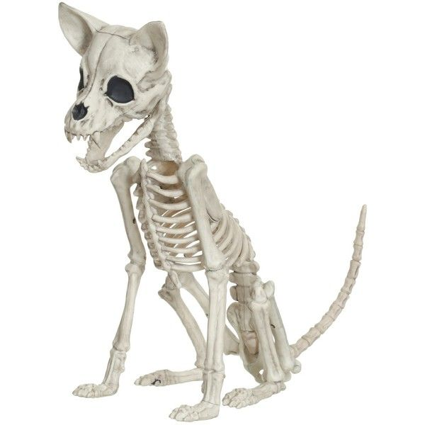 Halloween Chihuahua Skeleton - Hyde and Eek! Boutique™  Target ($15
