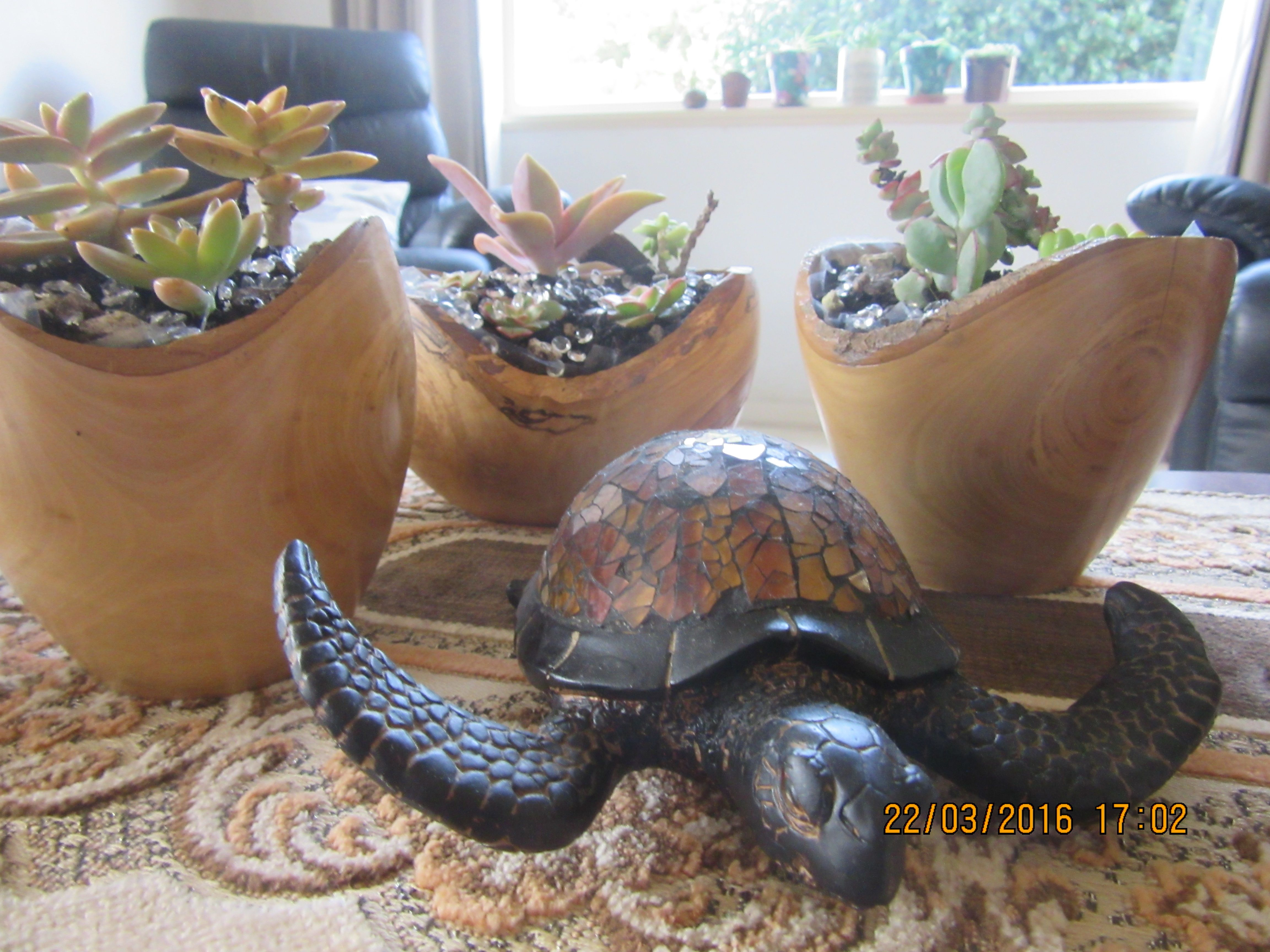 succulents in wooden bowls