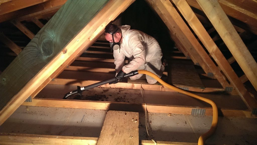 how to get rid of mice in attic under insulation
