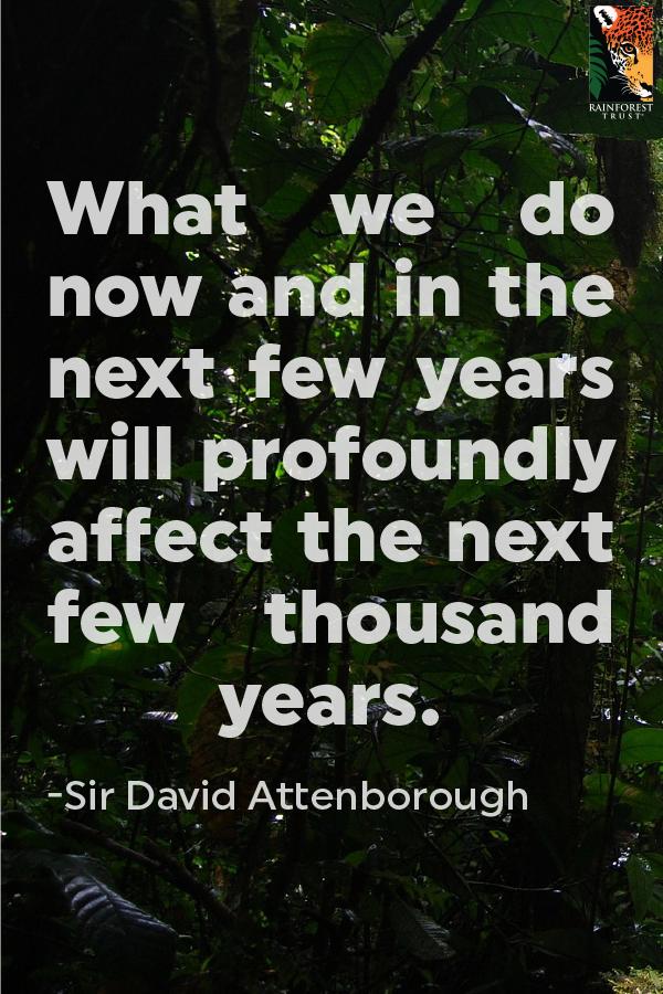 Conservation Action Fund - Rainforest Trust Saves Rainforest