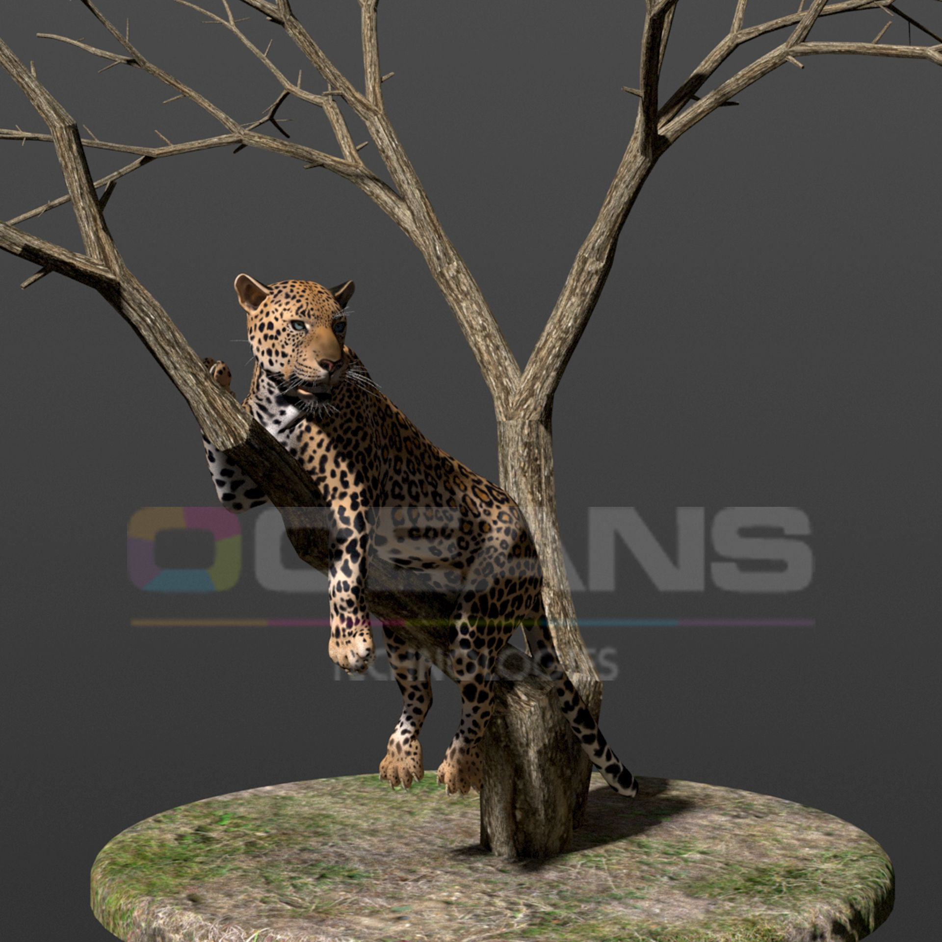 Leopard Animated Image Artificial intelligence