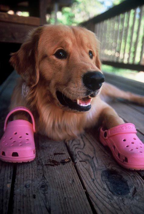 Iedereen weet dat Crocs fantastisch zijn om op te lopen